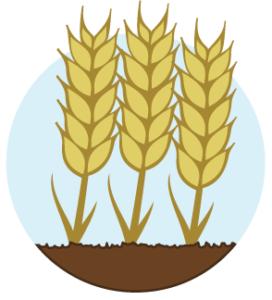 Terrain fertile